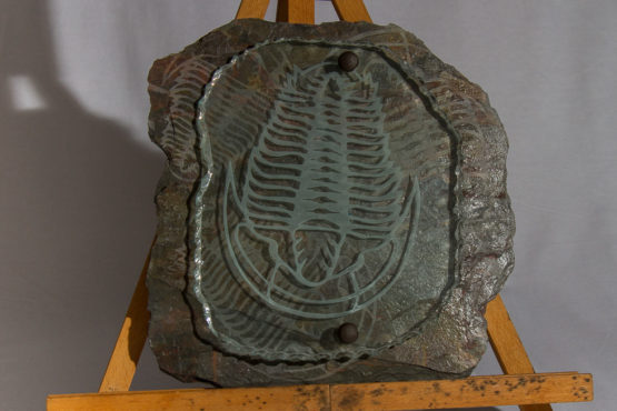 trilobite glass and tile